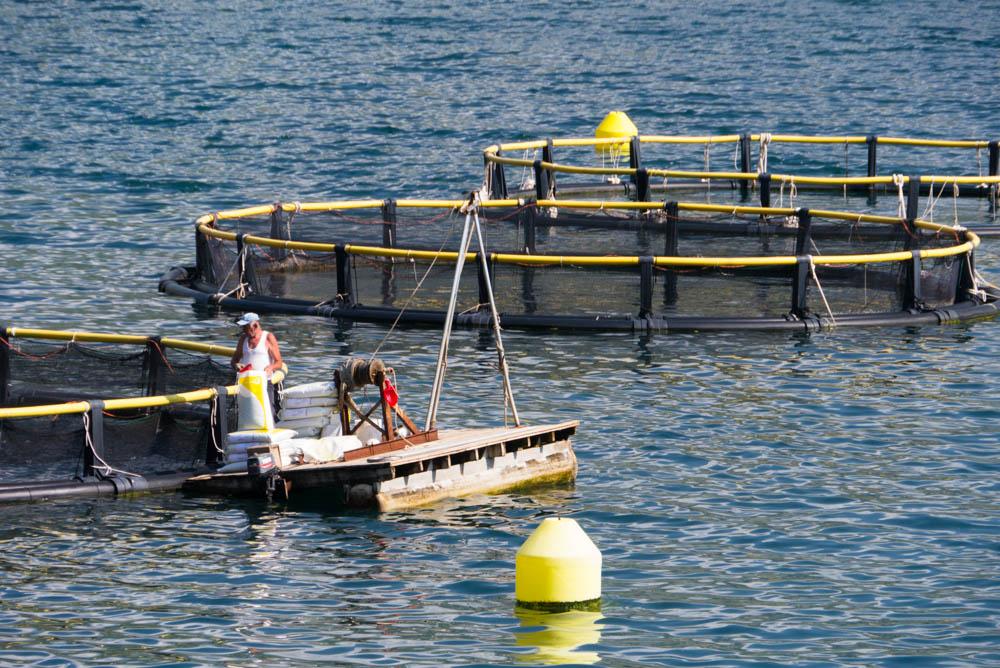 Как приготовить рыбные котлетки из рыбного фарша
